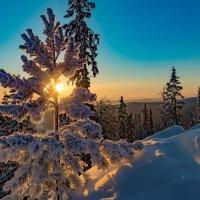 Утреннее солнце :: vladimir Bormotov