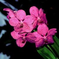 орхидея6 :: Alexey Bobrovskiy