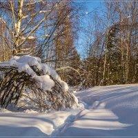 Утро в зимнем лесу 4 :: Андрей Дворников