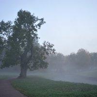 утро туманное... :: Андрей Вестмит