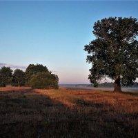 У Лукоморья дуб зелёный... :: Попов Валерий Борисович