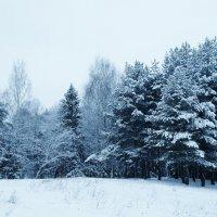 зимний лес :: Владимир