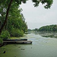 старый пруд :: Андрей Пахомов