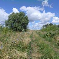 Июльский пейзаж, Чернозёмье :: ZNatasha -