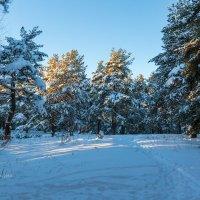 Зима :: Александр Синдерёв