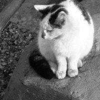 Кошка весной :: Дмитрий Никитин