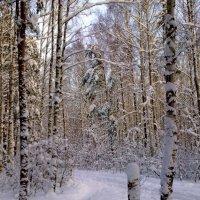 зимняя зарисовка :: Владимир