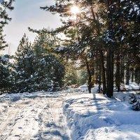 Зимний лес :: Dmitry