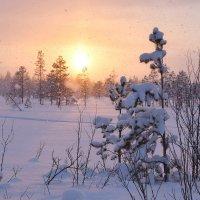 Сейчас феврль Красиво, белоснежно Сейчас февраль, Снежок кружится нежно… :: Елена Третьякова