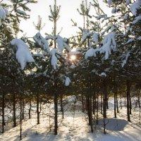В зимнем лесу. :: ТатьянА А...