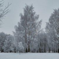 Сегодня у нас белым-бело :: Натали Зимина