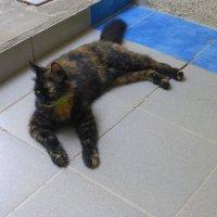 Кошка Моня :: Татьяна Лобанова