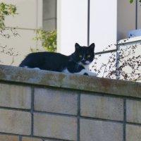 На ограде я лежу, за прохожими слежу! :: Татьяна Лобанова