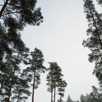 Лес, в котором я живу :: Инга Энгель