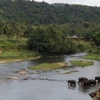 Слоны и река :: Любовь