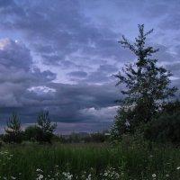 Холодное лето :: Лара Симонова