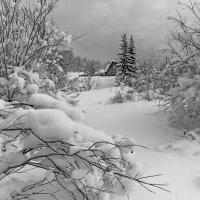 Белый снег. :: Сергей l