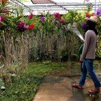 Полив орхидей :: Любовь