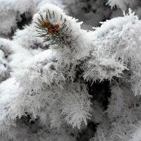 Свадебный наряд для елки :: Галина Aleksandrova