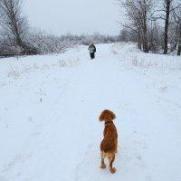 На зимних дорогах ) :: Natali