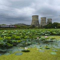 На озере лотосов летом :: Коноплёва Людмила Денисовна