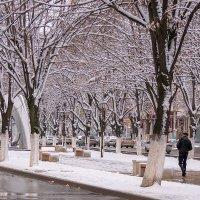 Снег выпал и растаял :: Игорь Сикорский