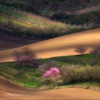 В ожидании весны .. :: Влад Соколовский