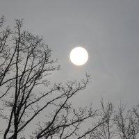солнце в дымке :: Галина