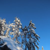 Мороз и солнце :: Валентина