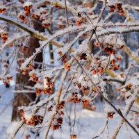 краса зимней флоры 3 :: Александр Прокудин
