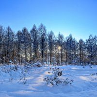 Морозный день :: Miro Forja