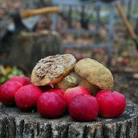 Натюрморта осенняя дачная яблочно-грибная... :: Александр Резуненко