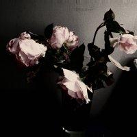 Осень цветов :: Елена Куприянова