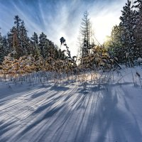 Зимний полдень :: vladimir Bormotov