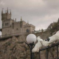 Романтика Ласточкиного гнезда :: Анна Лютикова