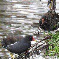 Две птицы :: Natalia Harries