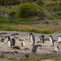 На острове пингвинов... :: Владимир Жданов