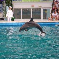 В дельфинарии. :: Alex 711402