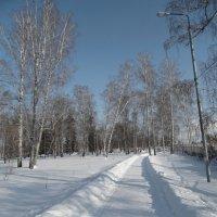 В зимнем парке :: Александр Подгорный