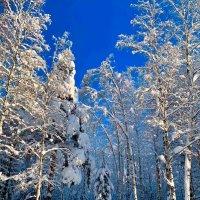 Зимний лес :: Алексей Сергеев