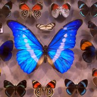Разноцветные ... :: Лариса Корж