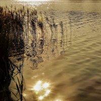 Капли солнца в холодной воде :: Елена Макарова