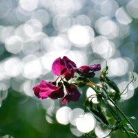 Полевые цветы. :: Штрек Надежда