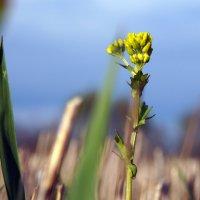 Среди скошенных трав... :: Варвара Высоцкая