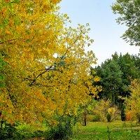 Осенний пейзаж :: Светлана