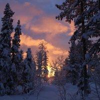 Лесные сказки :: Ольга