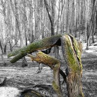 Весна... :: Андрей Пахомов
