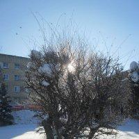 Утро февраля. :: Алексей Кузнецов