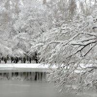 Очарование снежной зимы :: Татьяна Каневская