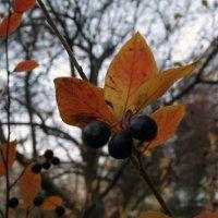 Осень :: Данил Матвеев